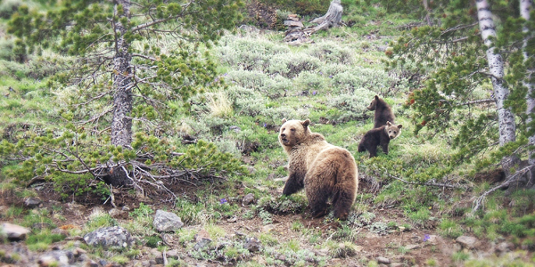 jackson hole wildlife safari